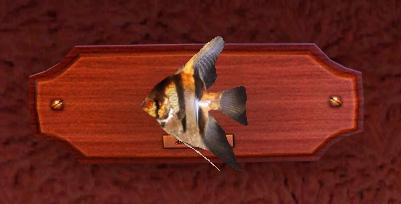симс 3 как ловить рыбу ангела в симс