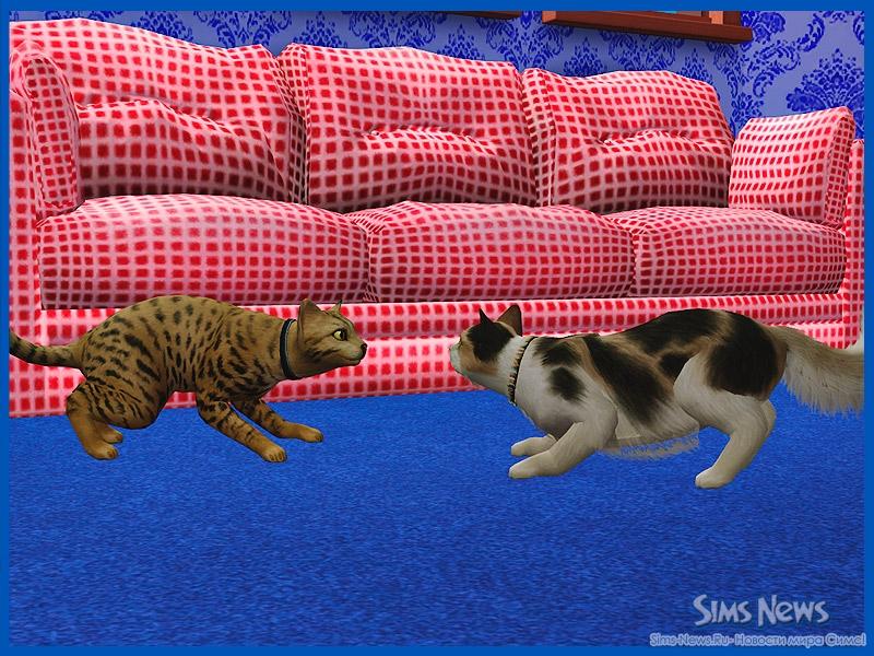 как познакомить котов между собой взрослых